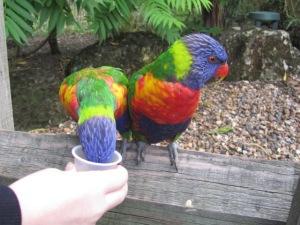 Love feeding the birds at Chessington
